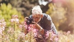 Elderly pensioner photographing pink flowers in the park, outdoor hobby. Active longevity. A keen and cheerful senior man.