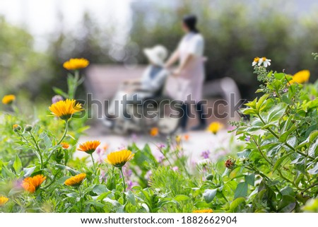 Elderly wheelchairs and care helpers take a walk in a flowered park ストックフォト ©