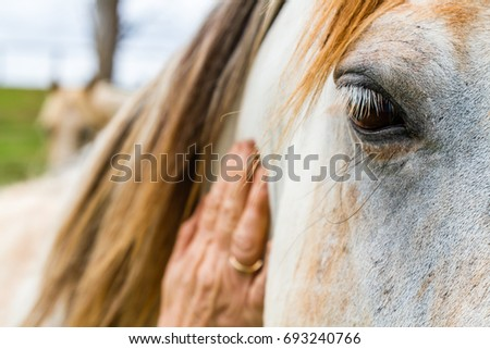 Elderly woman caressing the neck of a horse with her hand in close up focus on its eye with a gentle patient expression on an Equine Assisted Psychotherapy farm in NSW Australia - Shutterstock ID 693240766