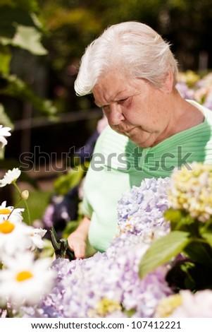 elderly woman with the flower garden shears cut