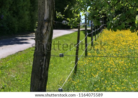 Electric fence in the field