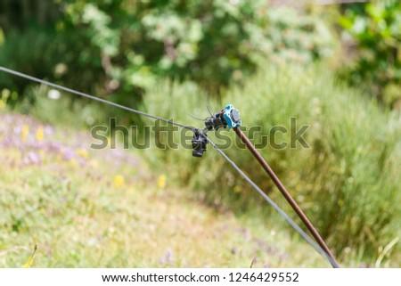 Electric fencing around pasture #1246429552