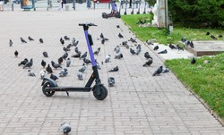 Electric scooter on the parking lot City bike rental system, public kick scooter on the street, electric scooter in Novosibirsk, Russia with a lot of pigeons around.