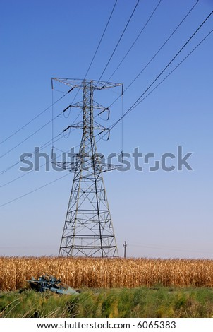 Electrical Transmission Lines over Ripe Corn At Harvest Time