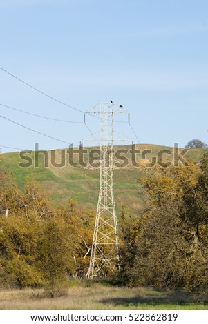 Electricity high voltage lines passing through a western sycamore trees grove, California #522862819