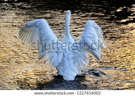 Elegant and elegant swan #1227656002
