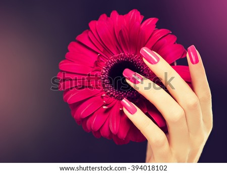 Elegant female hands with pink manicure on the nails . Beautiful fingers holding a \ gerbera .