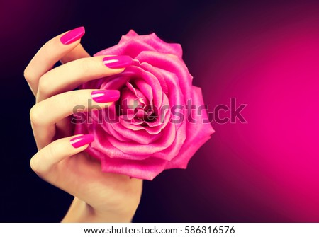 Elegant female hands with pink manicure on the nails . Beautiful fingers holding a rose . #586316576
