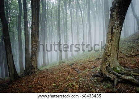 elegant forest picture with trees and fog