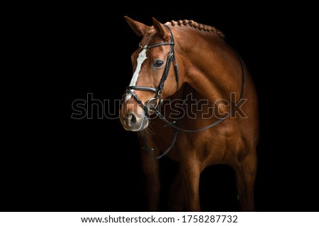 Elegant horse portrait on black backround. Horse on dark backround.