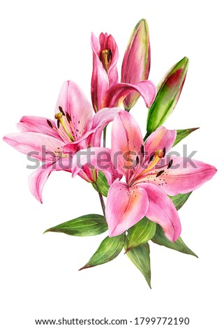 Elegant lily bouquet, pink lilies on an isolated white background, watercolor stock illustration.Greeting card, post card, decor. Foto stock ©