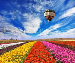 Elegant multi-color rural fields with flowers. Over field the huge air balloon flies