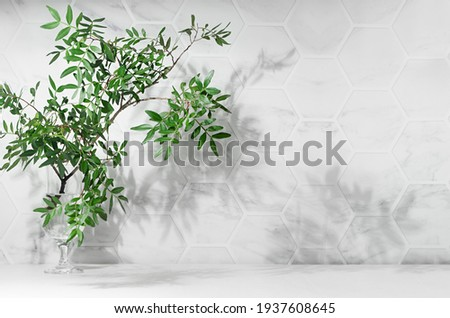 Elegant summer mediterranean background - green leaves on branch with dappled shadow in sunshine on white marble tile wall, wood table, copy space.