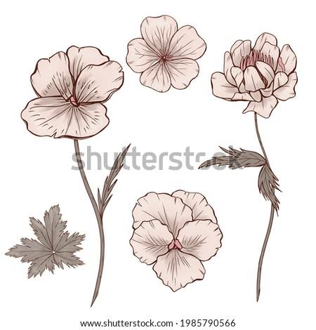 Elegant vintage style wildflowers, trollius ledebouri, pansy, forest botanica, wedding design elements Zdjęcia stock ©