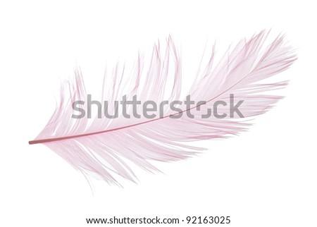 Elegant violet feather on white background - stock photo