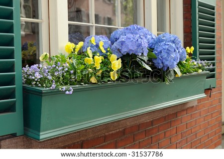 Elegant Window Box with Blue Hydrangea