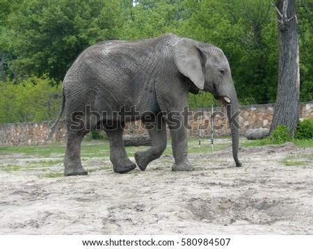 elephant Zdjęcia stock ©