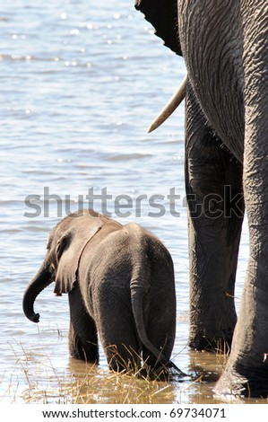 elephant and baby in water
