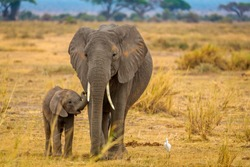 Elephant and her baby walking through Amboseli National Park