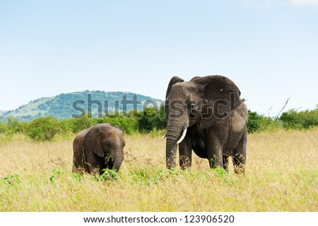 Elephant and its calf, Kenya, Africa