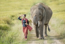 Elephant and mahout in village Surin Thailand,an elephant is like a family.