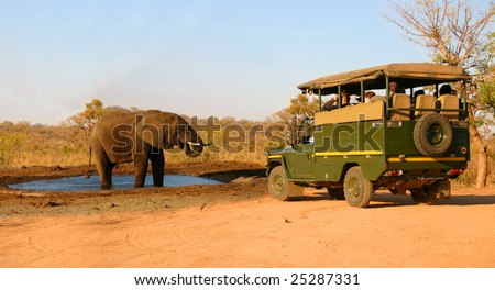 Elephant and safari truck