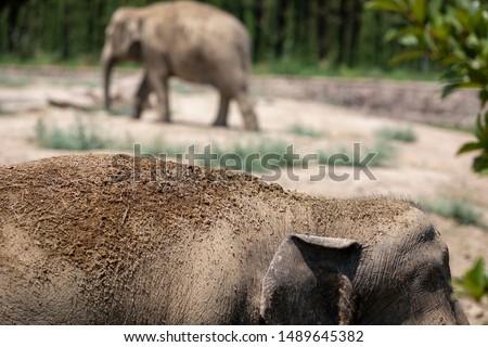 Elephant and Wildlife. Wildlife Concept #1489645382
