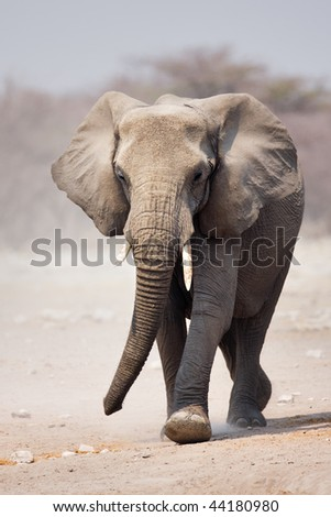 Elephant approaching over dusty sand in Etosha