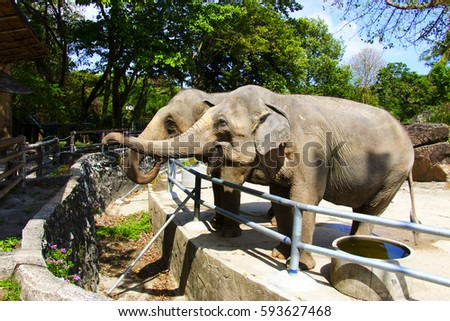Elephant are in the zoo