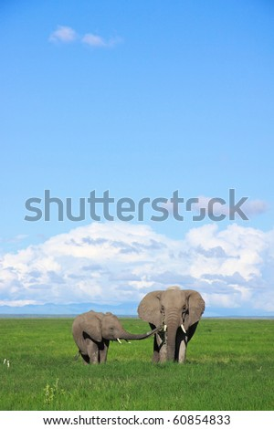Elephant calf and mother in open grassland, Amboseli, Kenya