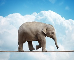 Elephant calf balancing on a tightrope concept for risk, conquering adversity and achievement