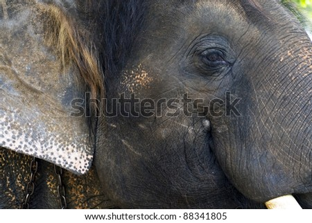 elephant close up