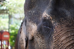 elephant close up/ elephant eyes