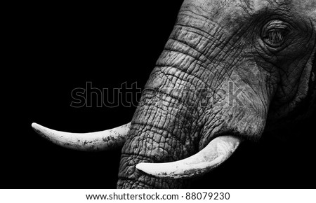 Elephant Close Up Low Key