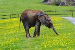 elephant eating in Cabarceno, Spain