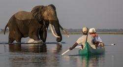 Elephant Encounter in a canoe