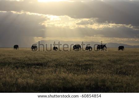 Elephant family crossing grassland plain