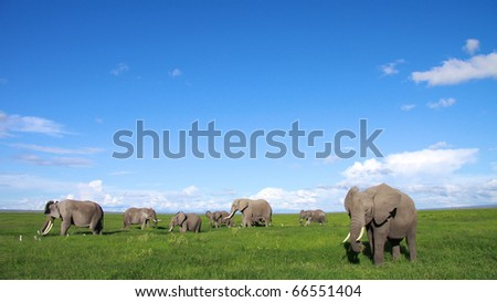 Elephant family feeding in the open plains of East Africa