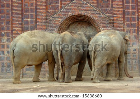 Elephant family from the backside are waiting for food in front of her hall