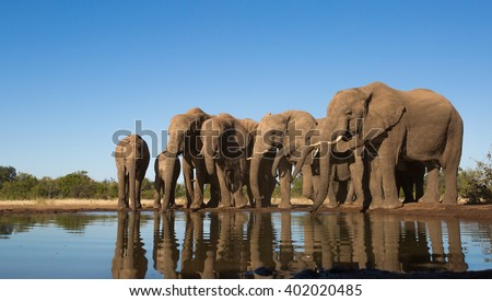 Elephant Family Group - at Mashatu water hole #402020485