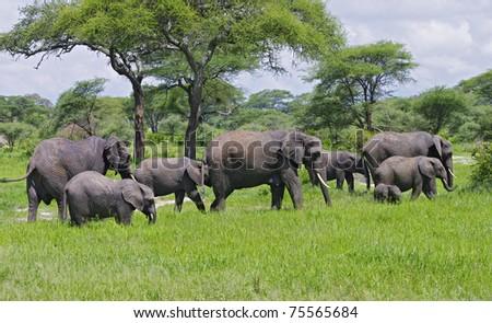 Elephant family in Tarangire National Park, Tanzania