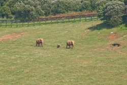 Elephant family in the nature park of Cabarceno in Spain