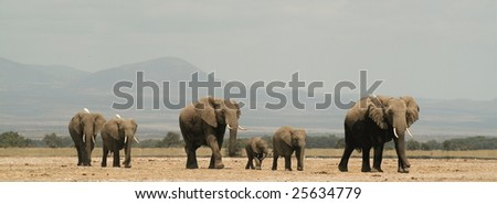 Elephant family walking together