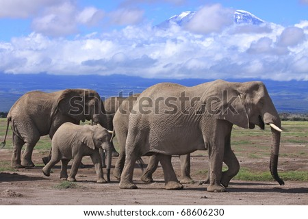 Elephant family with Mount Kilimanjaro in the background