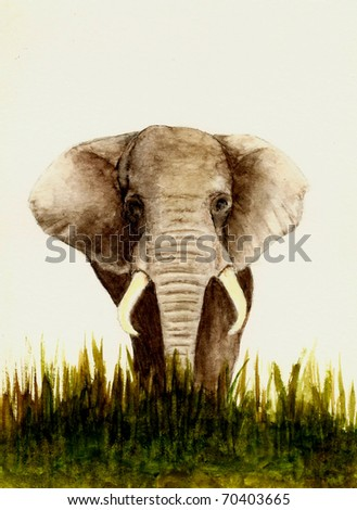 Elephant (Front View)