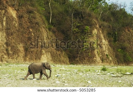 elephant going in  wild forest