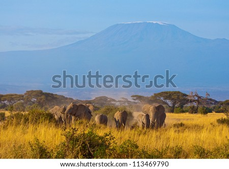 Elephant group in front of Kilimanjaro