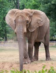 Elephant head and skin closeup.