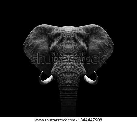Elephant head- black and white Elephant  Сток-фото ©