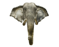 Elephant head , isolated with clipping path.jpg